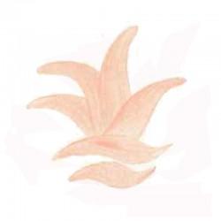 COLORANT SANS PLOMB CD19 ROSE CLAIR